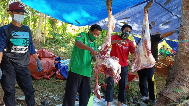 Wahdah Mamuju Selenggarakan Pemotongan 42 Ekor Hewan Kurban